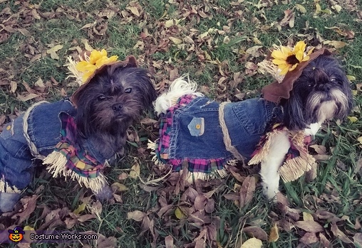 Scarecrows Dogs Costume