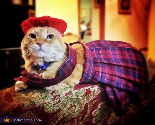 Scottish Laddie Cat Costume