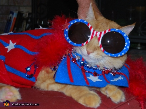 July 4, Scottish Laddie Cat Costume