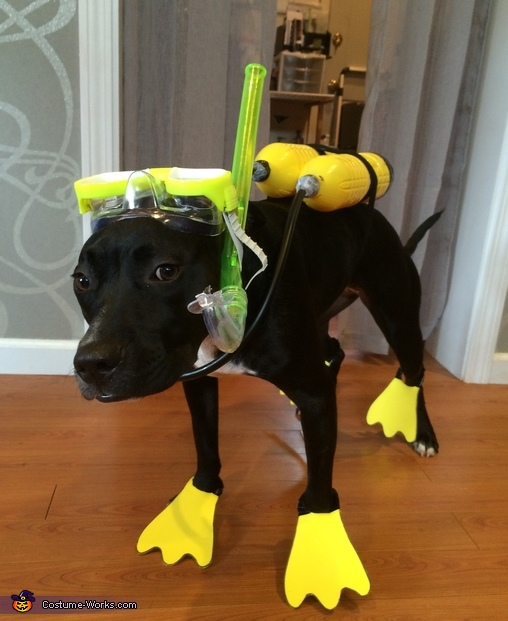 Scuba Dog Scuba Dog Costume & Scuba Dog Costume - Photo 5/5
