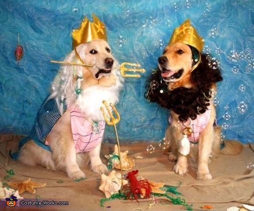 Gods of the Sea: Poseidon and Triton - Homemade costumes for pets