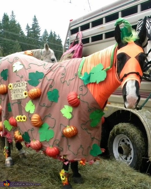 My horse, pokey, the pumpkin patch, Seahorse and Mermaid Costume