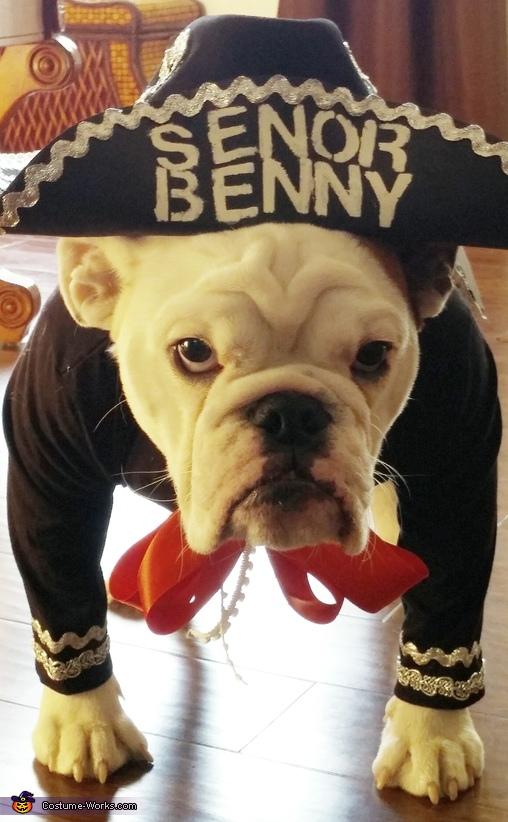 Senor Benny the Mariachi Homemade Costume