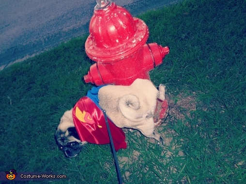 Super Grover Homemade Dog Costume!, Sesame Street Family Costume