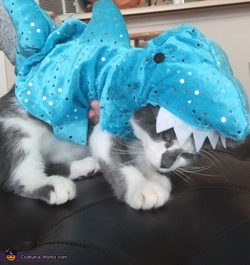 Shark Kitten Costume
