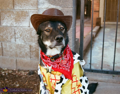 Woody the Sheriff Costume