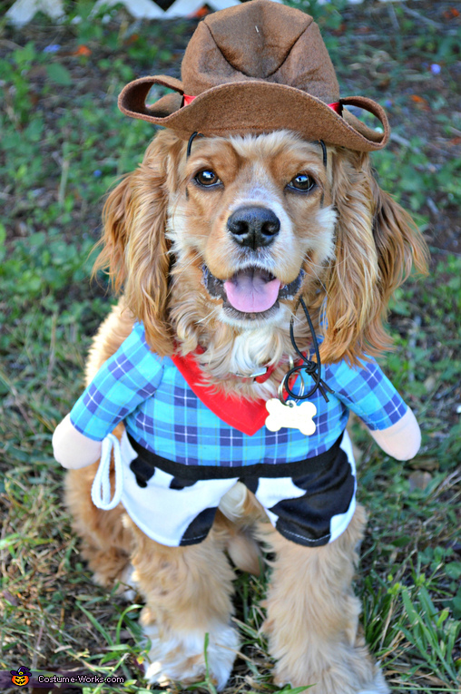 New Sheriff in Town- Bentley, Sheriff Dog Costume