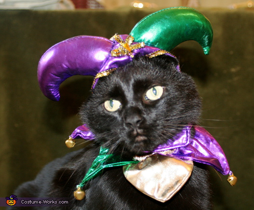 Jester Cat - Homemade costumes for pets