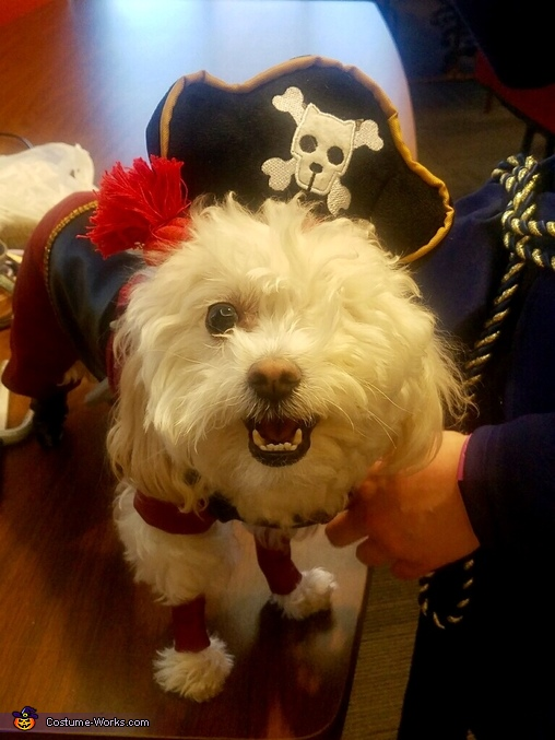 Sinbad loves his costume, Sinbad and Proteus Costume