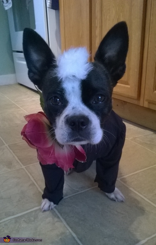 Skunk Dog Costume