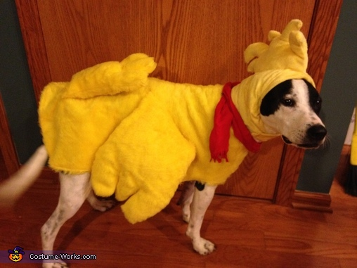 Woodstock's costume, Snoopy & Woodstock vs. The Red Baron Costume