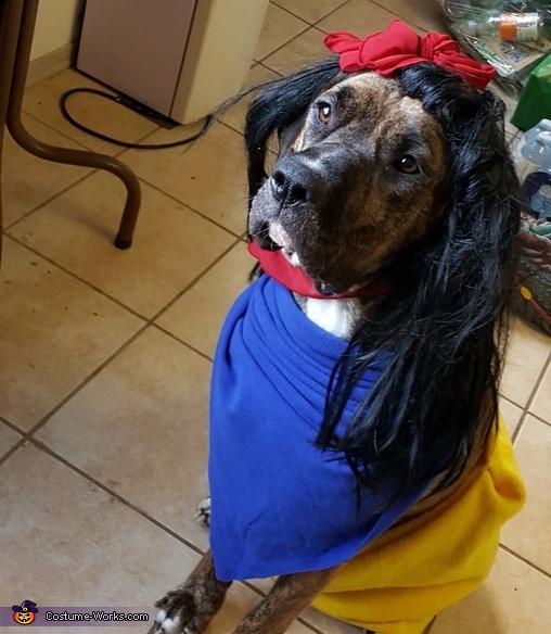 Snow White and Seven Dwarfs Costume