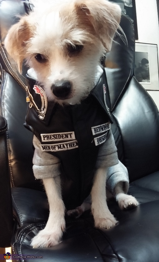 SOA Jax Dog Costume