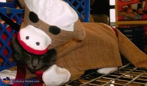 Sock Monkey Cat Costume Creative Diy