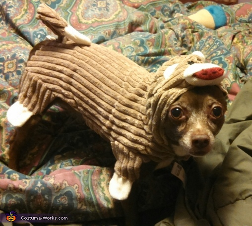 Sock Monkey Dog Costume