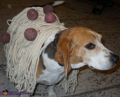 Spaghetti and Meatball Dog Costume