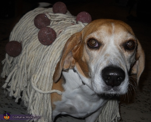 Spaghetti and Meatball Dog Homemade Costume