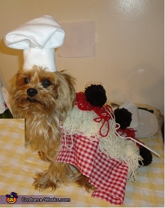Spaghetti and Meatballs 3, Spaghetti and Meatballs Dog Costume