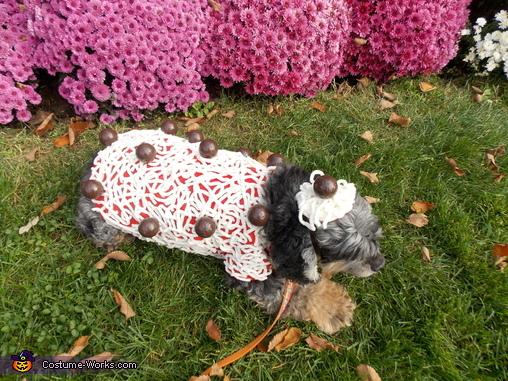 Spaghetti and Meatballs Dog Homemade Costume