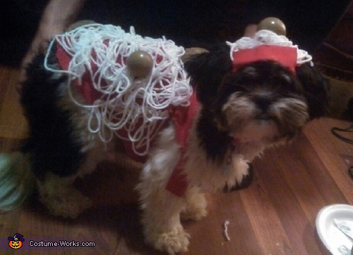 our dog Brewtus as spaghetti , Spaghetti & Meatballs Costume