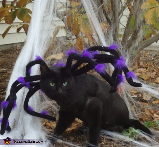 Simon the Spider,  Spider Costume