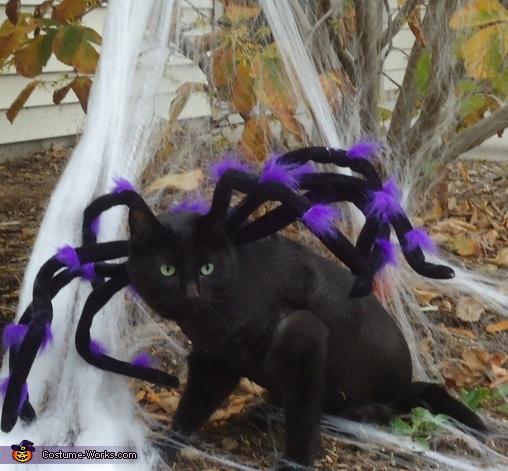 Simon the Spider,  Spider Costume