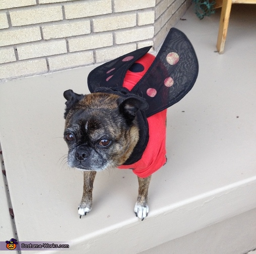 Lady Bug Lady Bug fly away home., Spiderman Costume