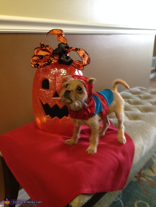 Trick-or-Treat, Spiderman Dog Costume
