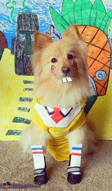 """Sponge""""dog"""" Costume"""