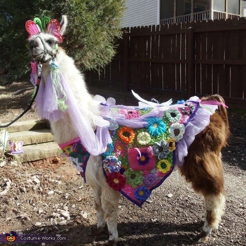 My llama Twist wearing Spring Flowers made for him. , Spring Flowers Costume