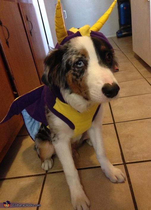 Spyro The Dragon Dog S Costume