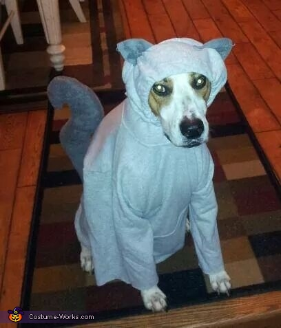 & Squirrel Dog Costume