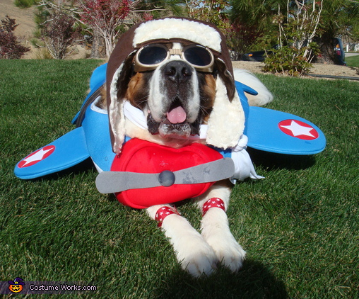 A Star Spangled Halloween - Homemade costumes for pets