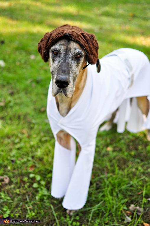 Princess Leia Nova, Star Wars: The Canines Strike Back Costume