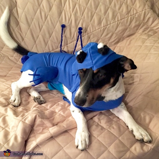 Stitch Dog Homemade Costume