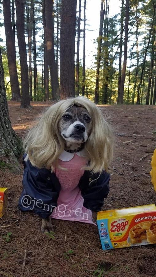 Stranger Dogs, Stranger Dogs Costume