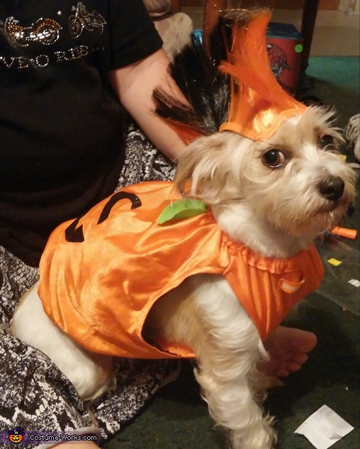 Dog in pumkin, Sugar Skull Family Costume