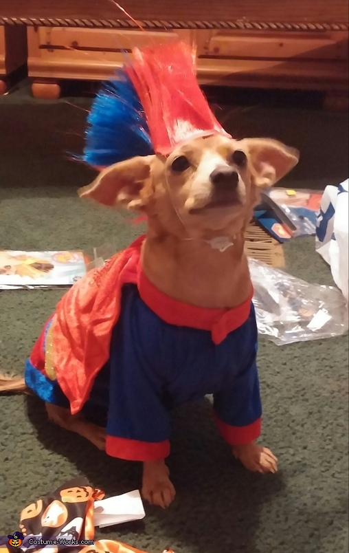 Peanut as super man, Sugar Skull Family Costume