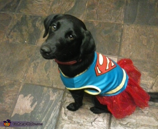 Super Abby Dog Costume