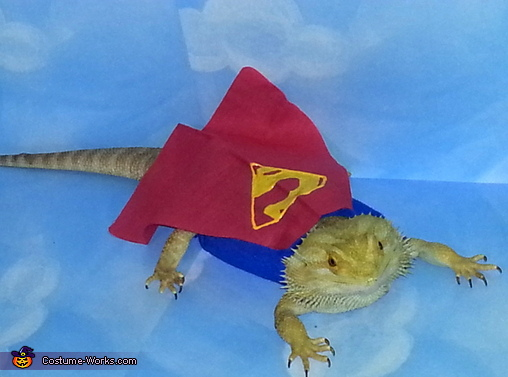 Super Beardie Costume