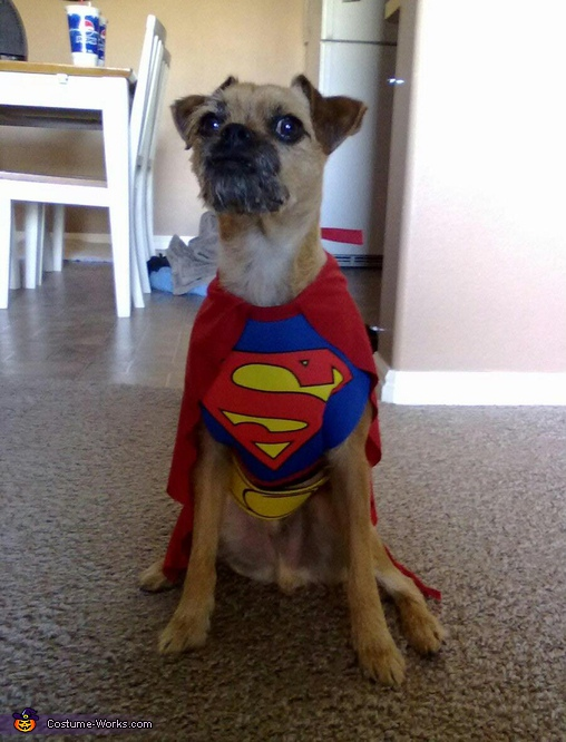 Super Goggie - Store Bought costumes for pets