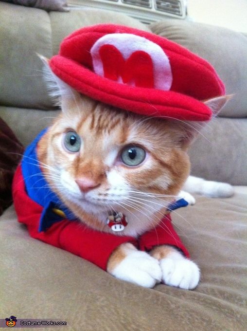 Super Mario Cat Homemade Costume