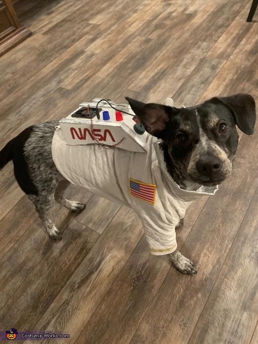 Nasa Pup!, Super Nova Costume