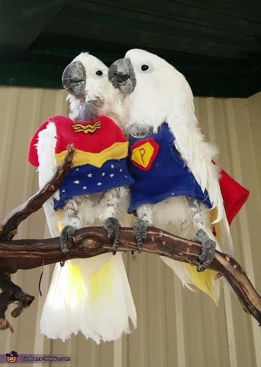 super parrot and wonder bird costume