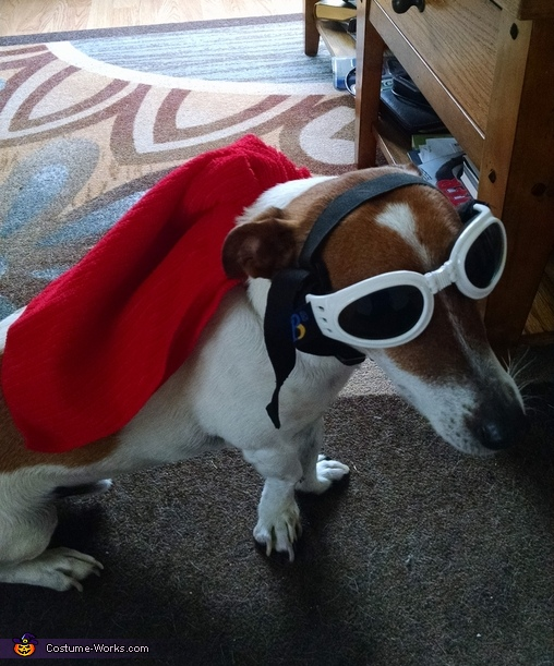 Super Pup Costume