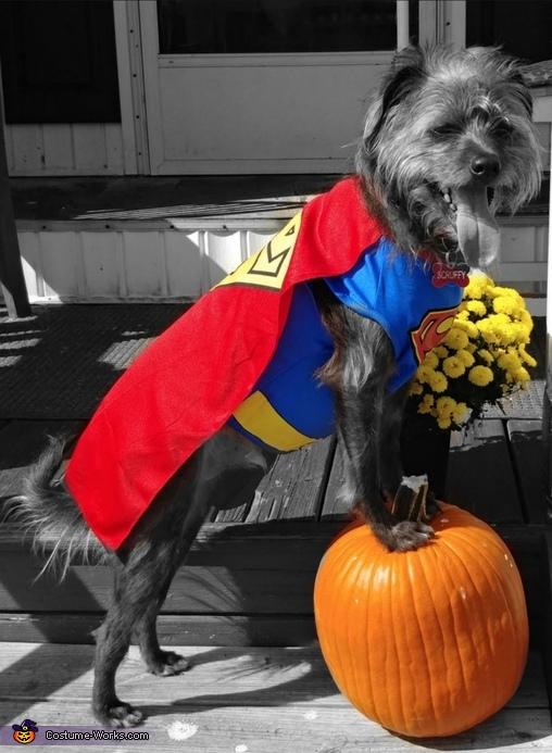 Super Scruffy Costume