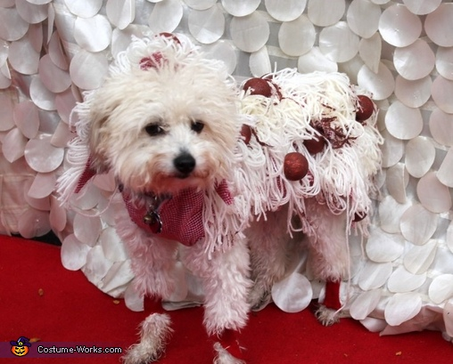 Super Spaghetti Surprise Dog Costume