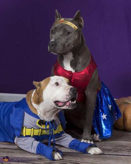 Superdog Heroes Costume