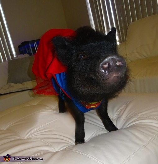 Superwoman Pig Costume