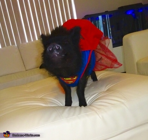 Ready to save the day!, Superwoman Pig Costume